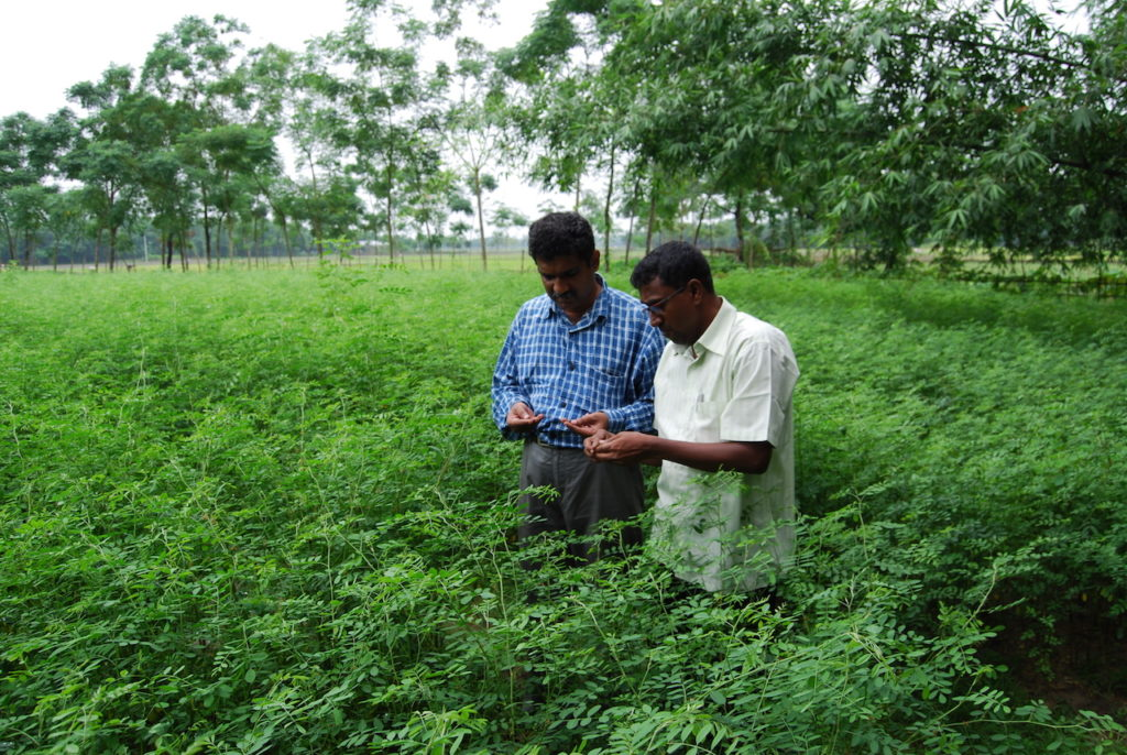 Work in Indigo field. Photo Credit: AD Roy